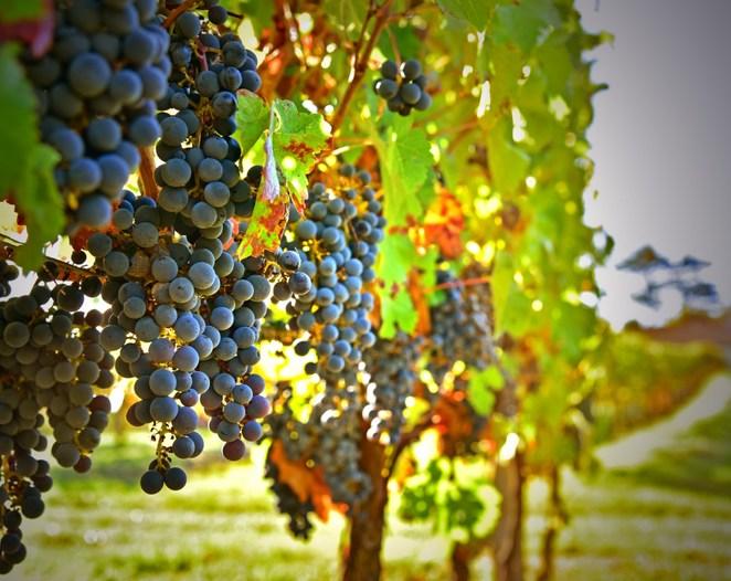 Domaine viticole à Faleyras près de Bordeaux
