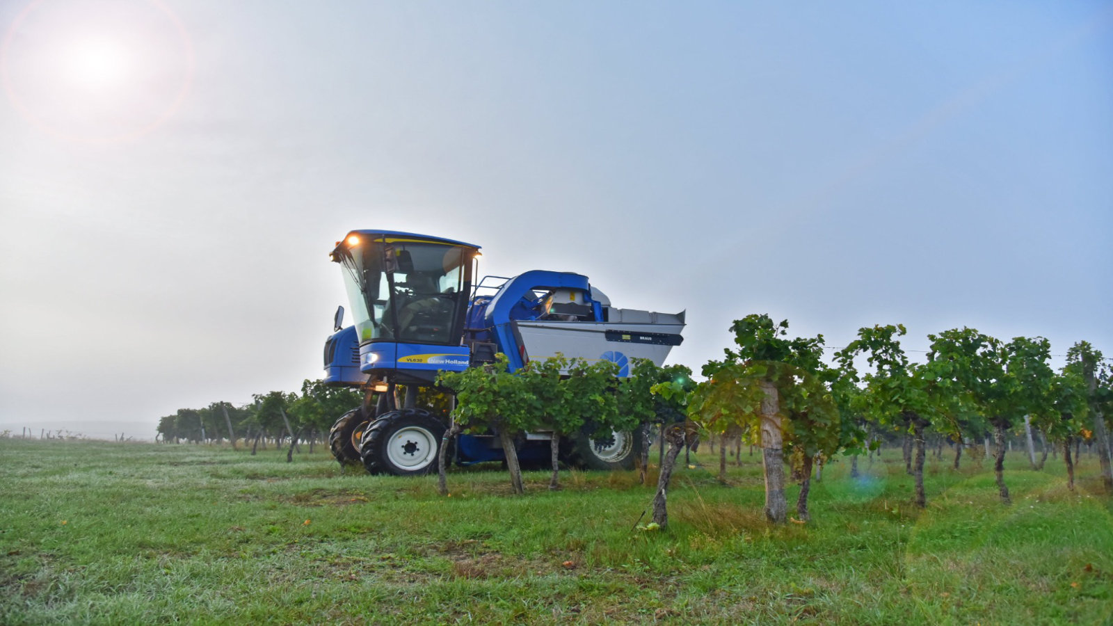 Récolte dans les Vignobles Nadau
