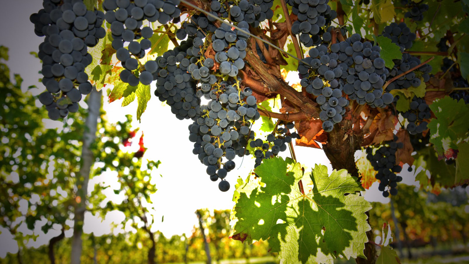 Domaine viticole à Faleyras