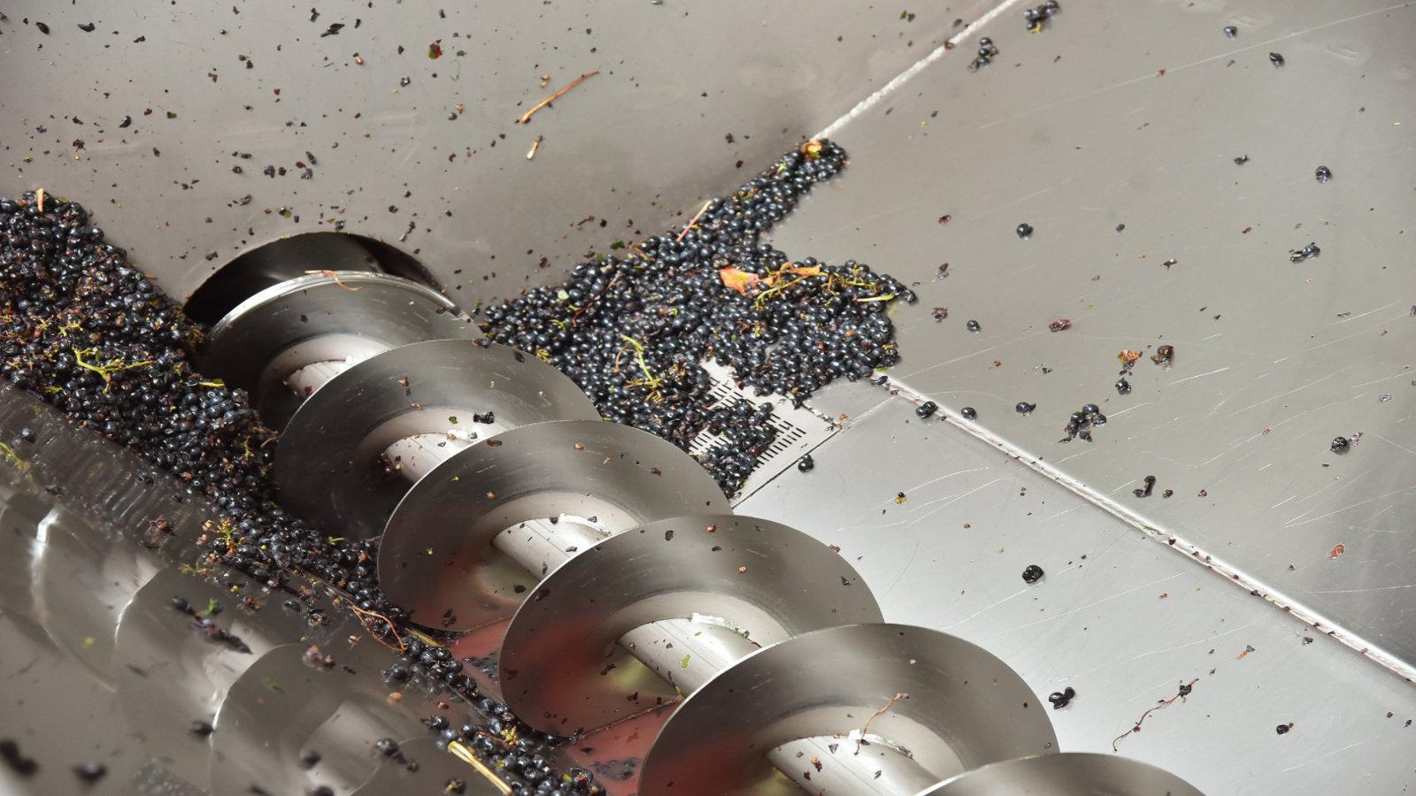 Nos raisins sont broyés directement dans les cuves