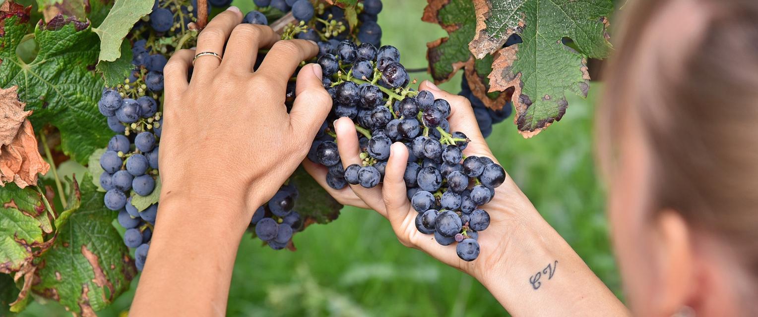 L'art du vin, une passion familiale